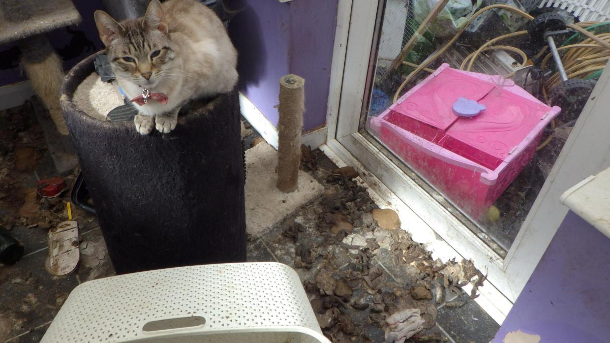 Jennifer Waddup, of Buckland Road, Taunton, banned from keeping cats