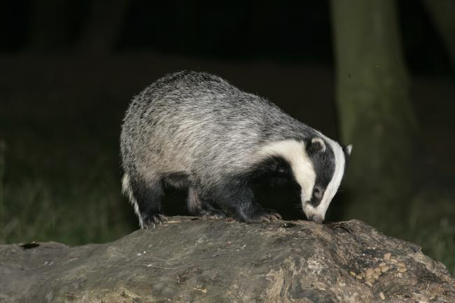 Scott Milne admitted illegally killing 28 badgers