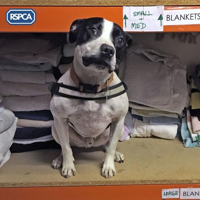 LOOKING FOR LOVE: Bailey, who is heading up the appeal for blankets at the animal centre