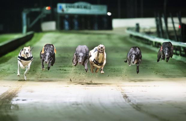 Somerset County Gazette: Greyhounds racing with their paws on the air