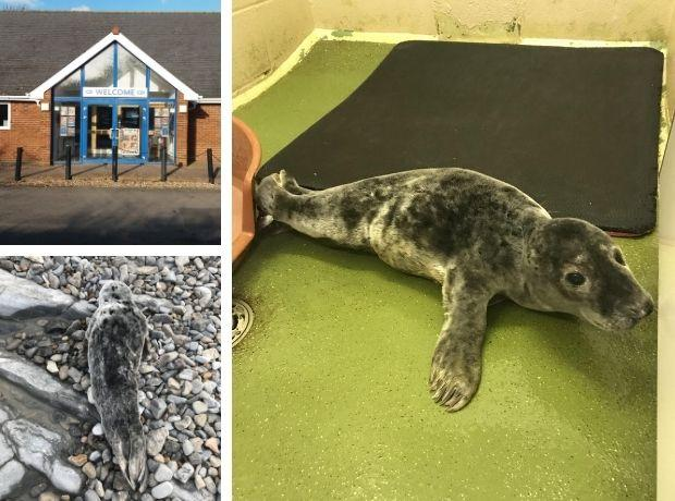 Cute seal finds new home in Taunton after being rescued from Wales coast