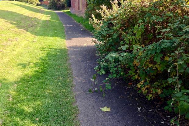 CONCERNS: Over overgrown pavements
