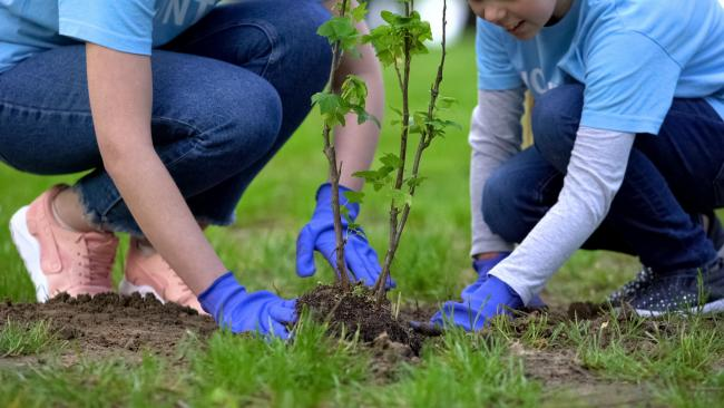 Tree planting. Pic: Getty Images
