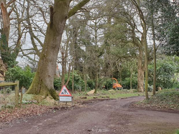 Somerset County Gazette: Trees have been cut down along the public footpath at Nynehead Court