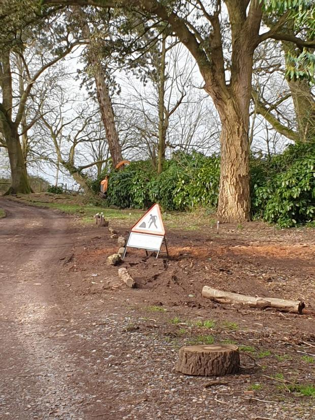 Somerset County Gazette: TREE CUTTING: at Nynehead Court. Pic: Malcolm Turner