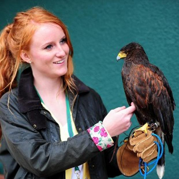 Rufus the hawk is back with owner Imogen Davis at SW19