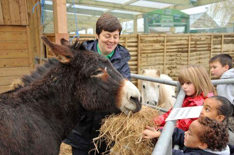 Donkeys join Santa for Monkton Elm Christmas grottos
