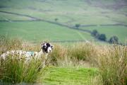 Two conferences will focus on helping upland farmers develop profitable farming businesses