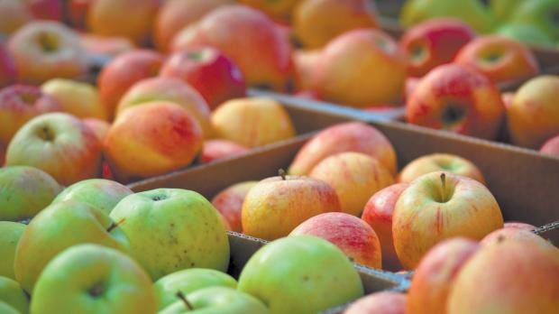 Somerset County Gazette: TOP CROP: Apples can be pickled