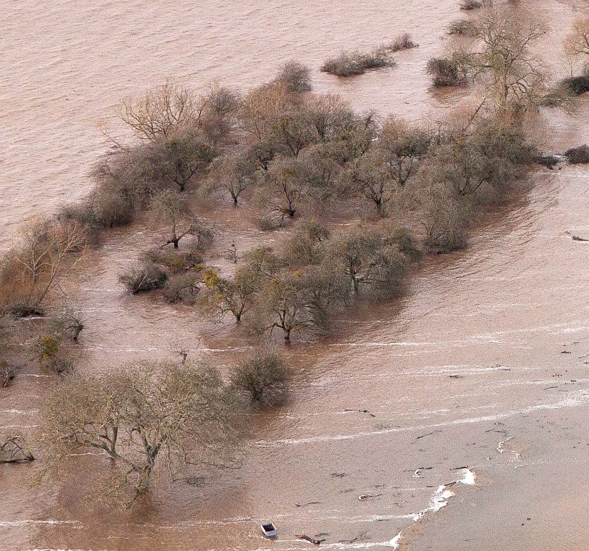 A small orchard is swamped by floodwater. Photo: Adam Gray/SWNS