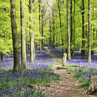The Woodland Trust said warmer weather has led to bluebells flowering earlier than last year