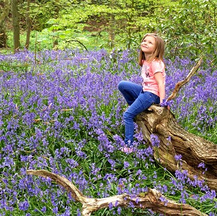 Kadie Lane, five, plays amongst the bluebells in Witton Country Park, Blackburn,
