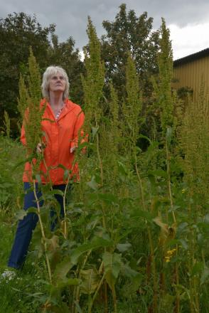 CLLR Gail Everett among some of the long weeds in Trinity Way, Minehead. Photo: Somerset Photo News.