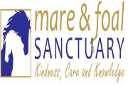The Mare and Foal Sanctuary is appealing for donations for its shops