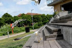 Seagulls in Taunton - do you love them or hate them?