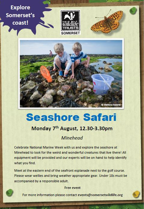 Seashore Safari