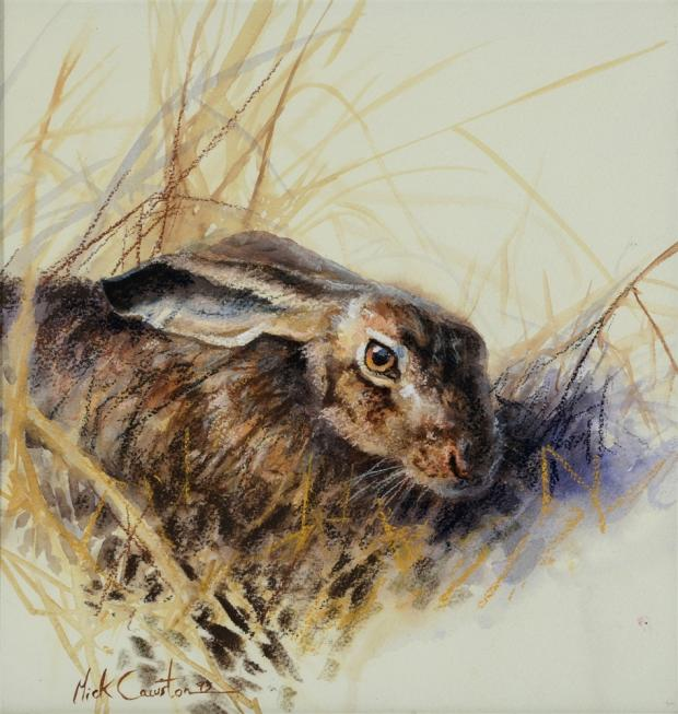 Somerset County Gazette: DELIGHTFUL WATERCOLOUR: Study of a hare signed and dated by artist Mick Cawston was bought by a room bidder for £740