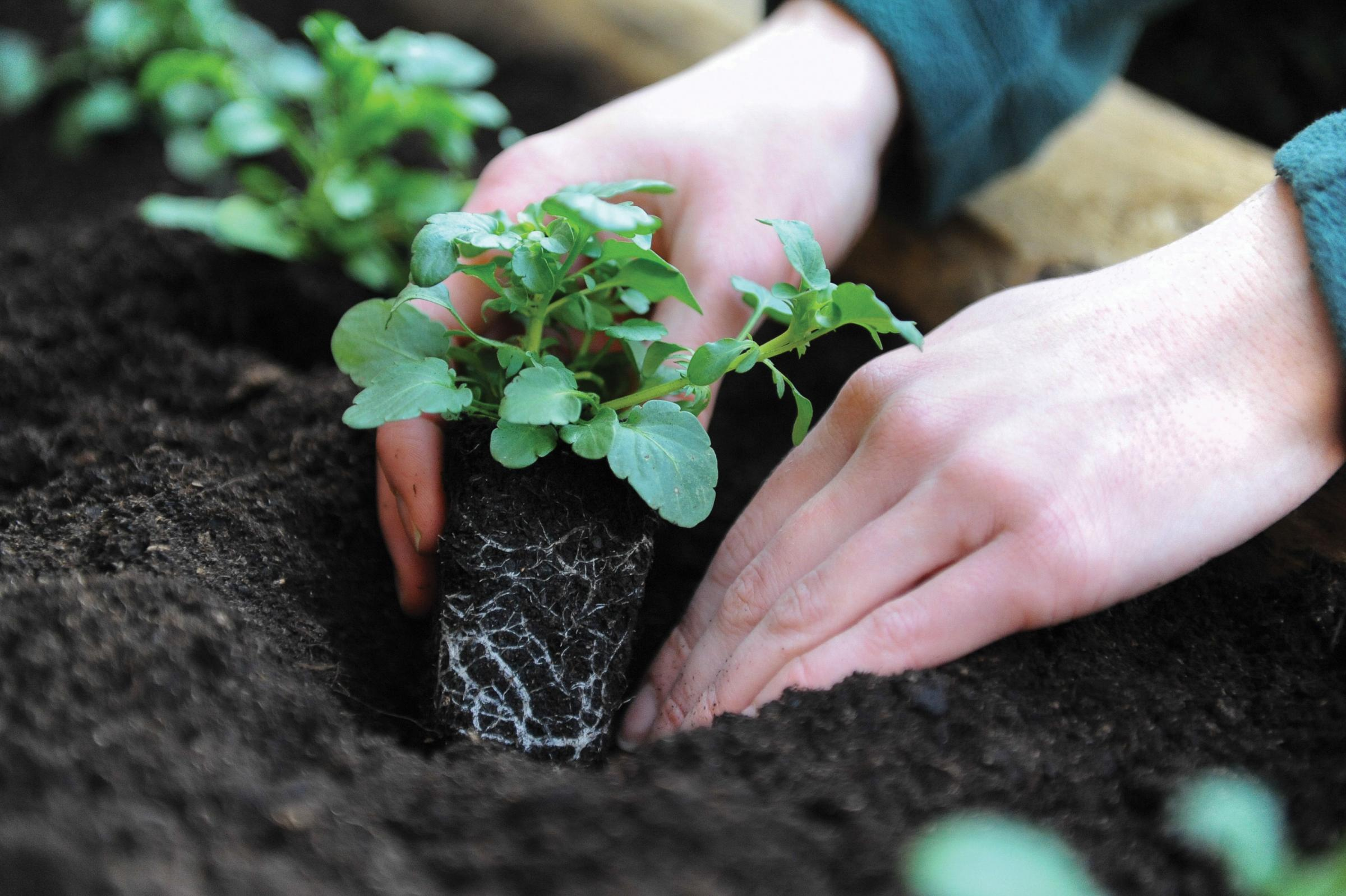 PLANTS WANTED: The event gives people the chance to swap unwanted plants