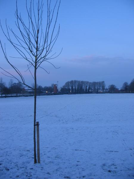 Snow in Somerset, February 2009