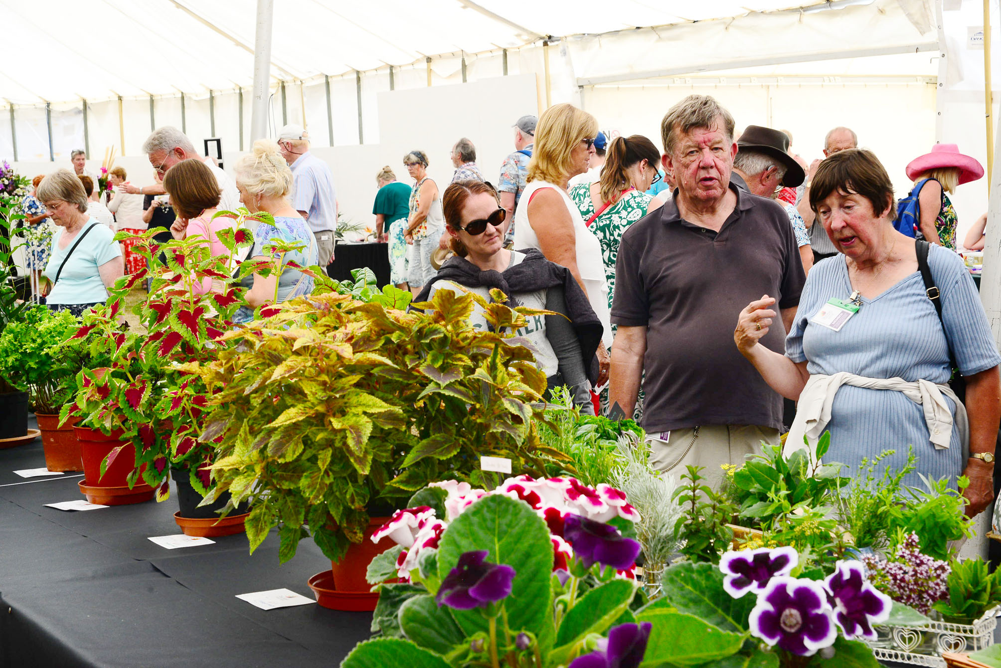 VISITORS: Taunton Flower Show attracts thousands each year
