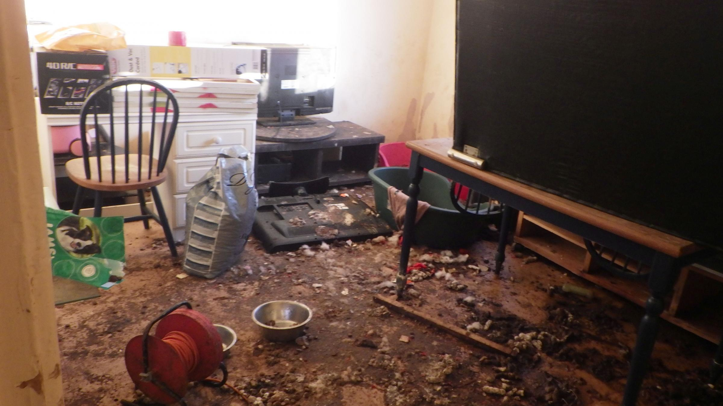 SQUALOR: The living room of Talia Forward's house