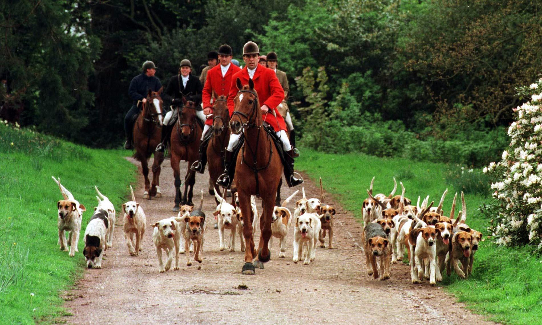 Cheers as huntsman cleared of hunting illegally with Quantock Staghounds