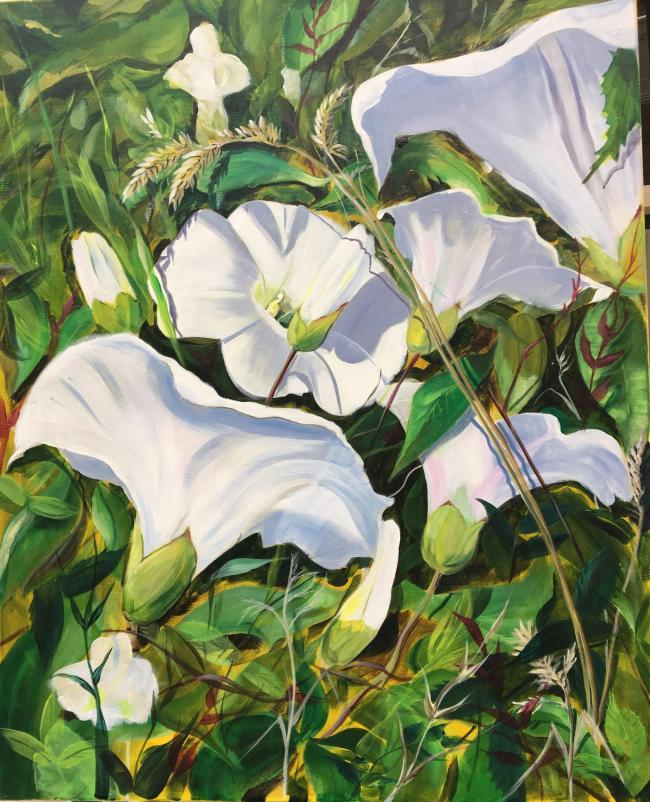 White Blooms of bindweed Ruth Drew