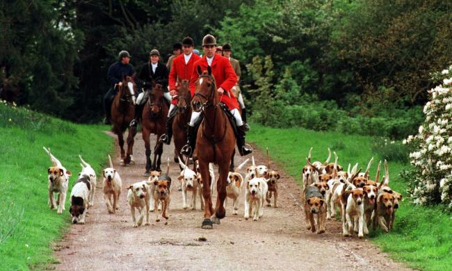 DYING OUT?: The Quantock Staghounds pictured in 1997. PICTURE: PA