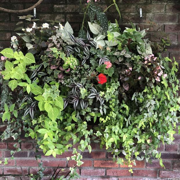 Somerset County Gazette: ON DISPLAY: Hanging houseplants outside. Picture: Michael Perry/PA